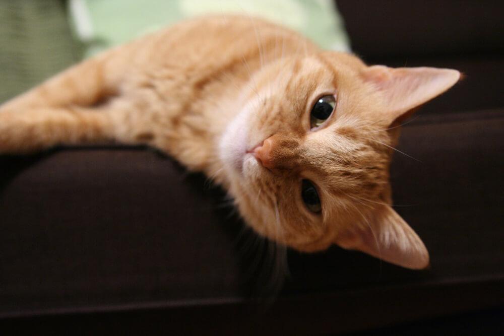 日本の高齢猫のイメージ写真