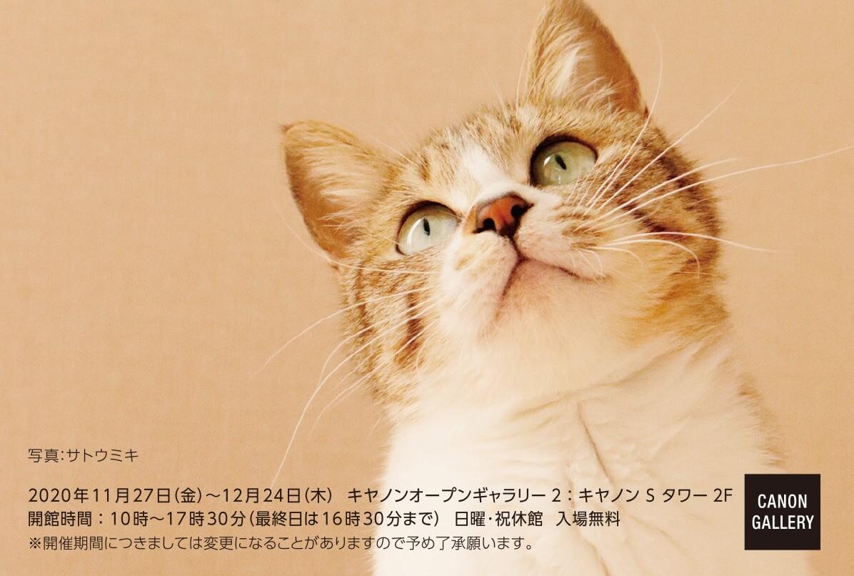「品川キヤノンオープンギャラリー ねこ写真展」~今を生きる猫たちのキオク・キロク~ メインビジュアル