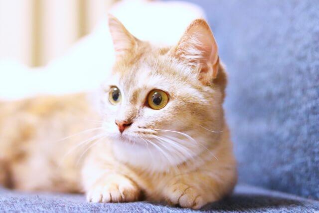 かわいい猫のイメージ写真