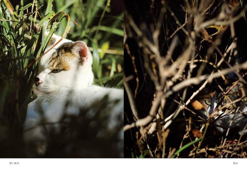 草むらに隠れながら鋭い眼光を放つ野良猫の写真 by 阪井壱成
