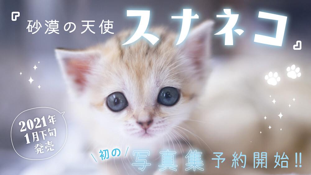 日本で初めて発売されるスナネコの写真集「砂漠の天使 スナネコ」表紙イメージ