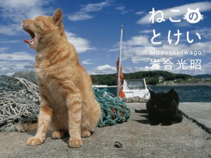 自由気ままなネコの一日ってどんな感じ?岩合光昭ミニ写真展「ねこのとけい」横浜で開催