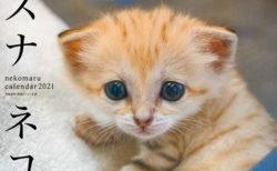スナネコの特集&カレンダーもついてくる!みんなで作る猫マガジン「ネコまる」の最新号が登場