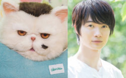 ブサ可愛い猫の声を演じるのは…神木隆之介!連続ドラマ「おじさまと猫」のねこ役が発表