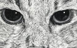 ペンで描いたネコの絵が超リアル!画家・山田貴裕さんの個展が東京&WEBで同時開催