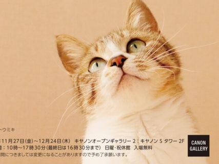 43名のネコ写真家による作品が集結!キヤノンのギャラリーで「ねこ写真展」が開催中