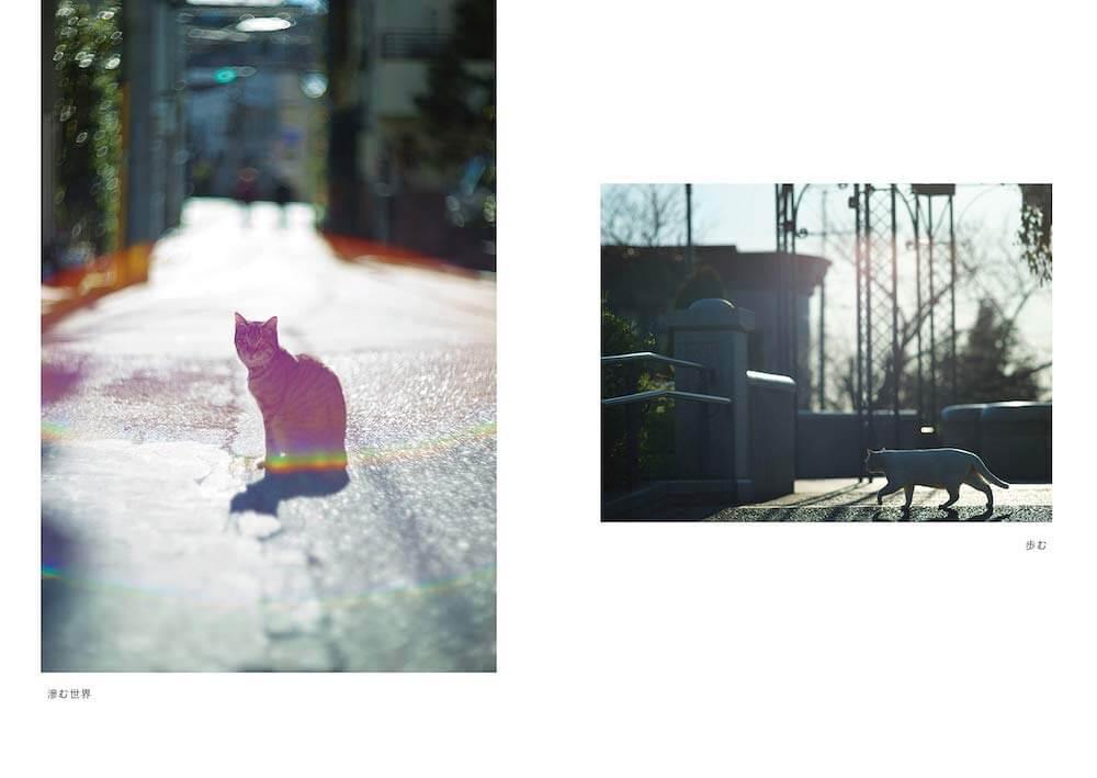 外猫がいる町並みの風景写真 by 阪井壱成