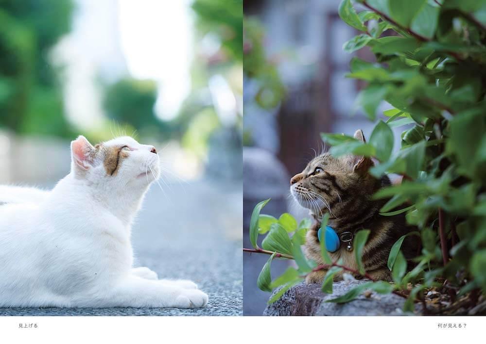 上を見上げる2枚の野良猫の写真 by 阪井壱成
