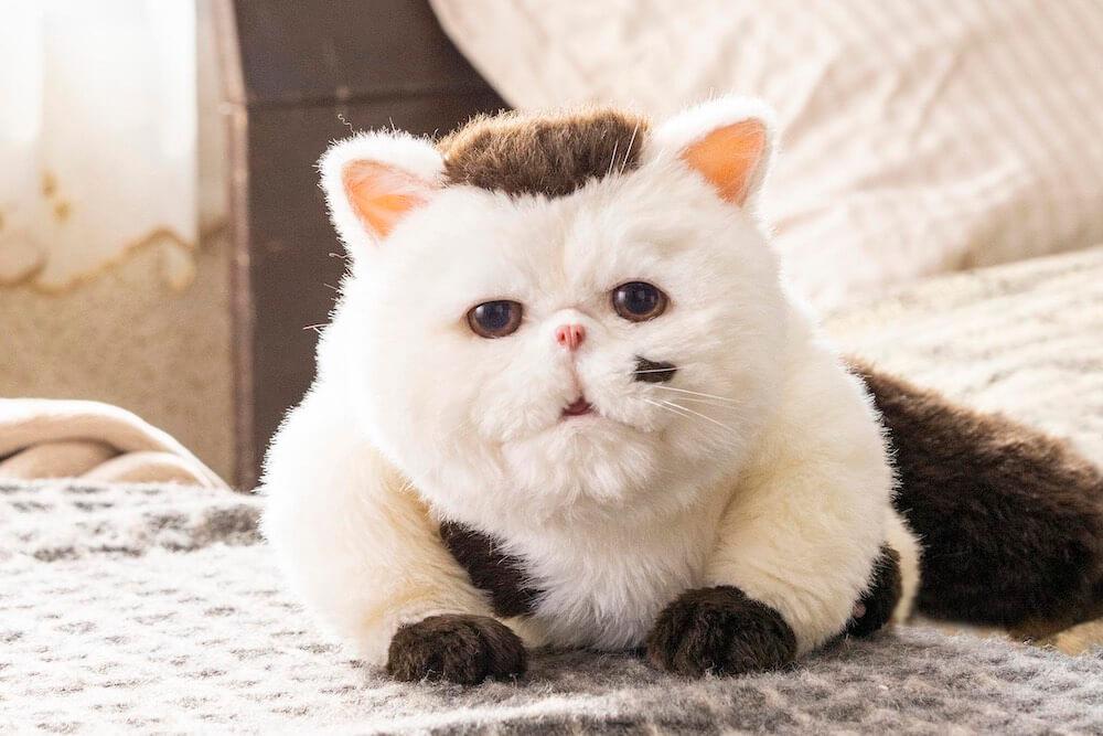 テレビドラマ「おじさまと猫」に出演するふくまる