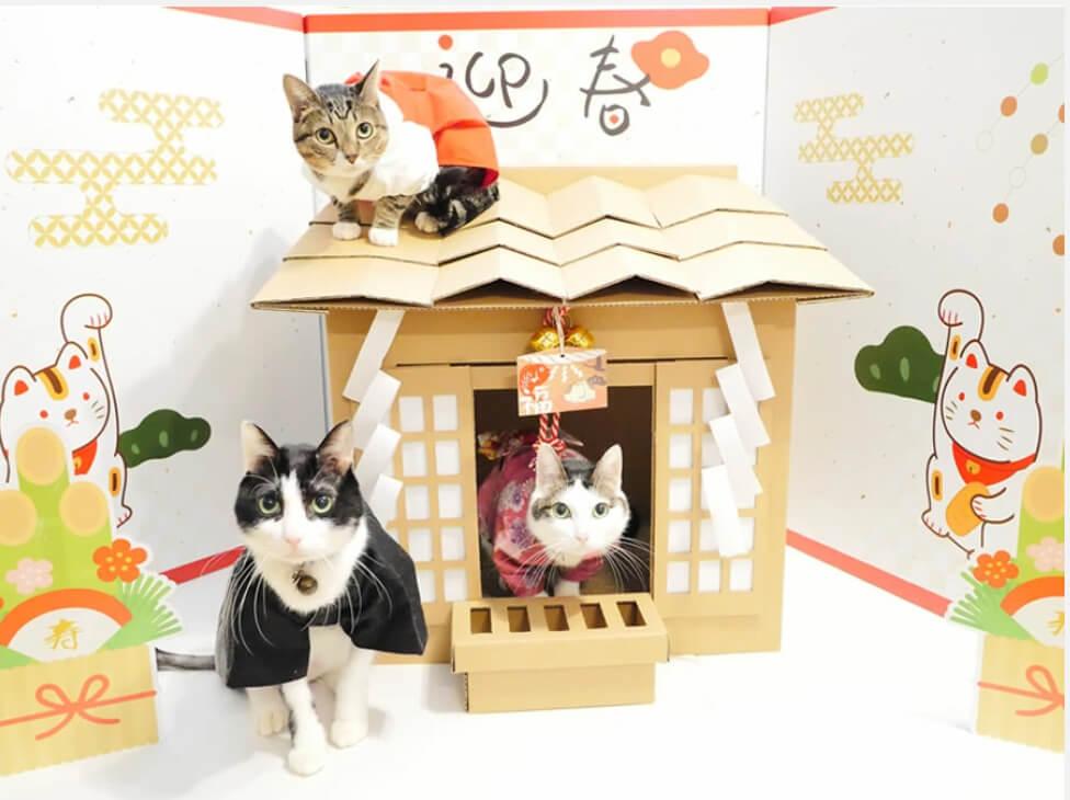 神社をモチーフにした猫ハウス「ネコ神社ハウス」製品使用イメージ