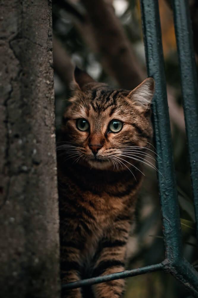 柵の隙間から様子をうかがう猫のイメージ写真