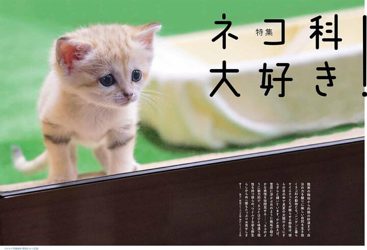 雑誌「ネコまる」のネコ科大好き特集ページ