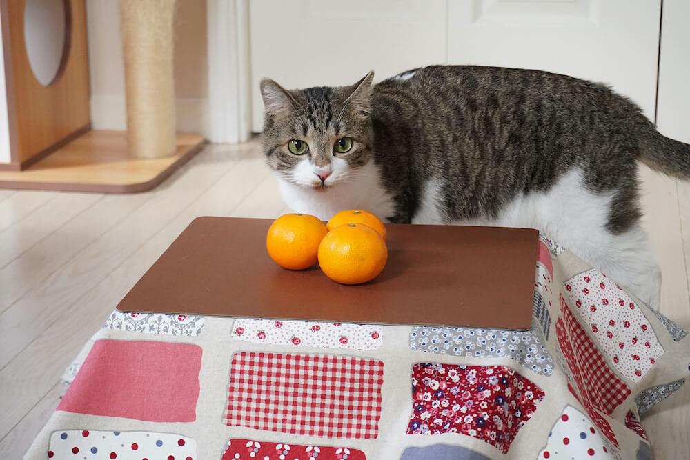 猫専用のこたつの上にあるミカンを見つめる猫