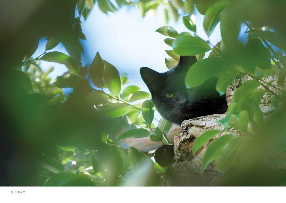 木の上から人間を警戒・監視している黒猫の写真 by 阪井壱成