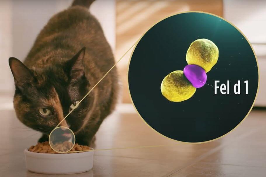 猫アレルギーの原因物質を中和して減らすキャットフード「ピュリナ プロプラン リブクリア」を食べる猫のイメージ