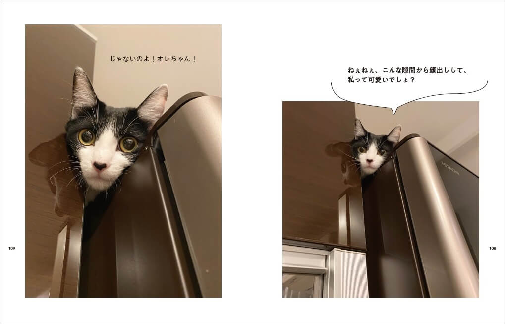 藤あや子さんの愛猫、マルとオレ by 『マルとオレオと藤あや子』