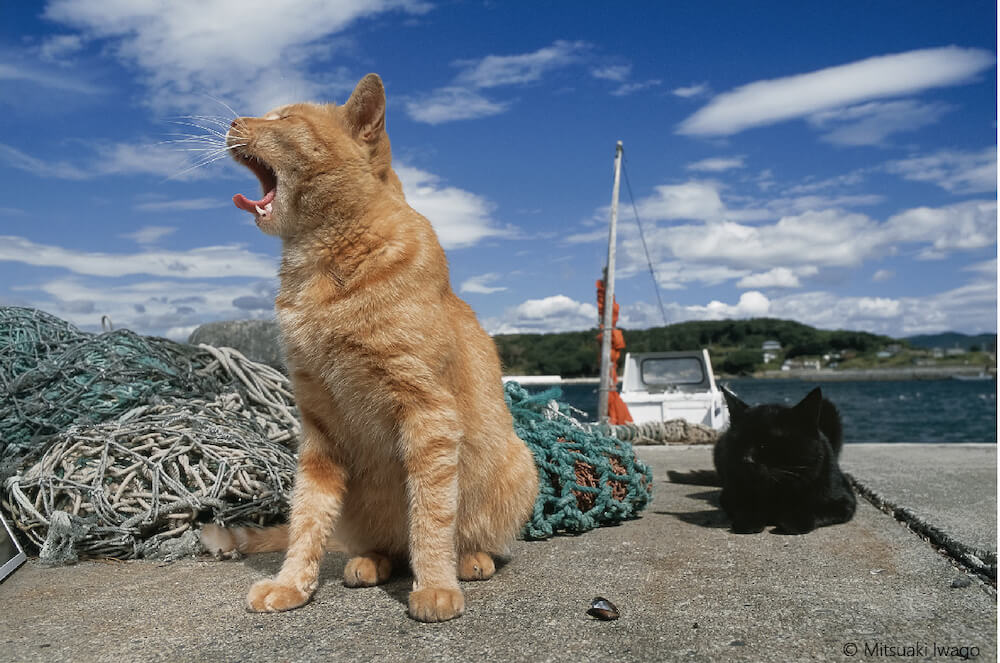 漁港で大きなあくびをする茶トラ猫の横顔 by 岩合光昭ミニ写真展『ねこのとけい』