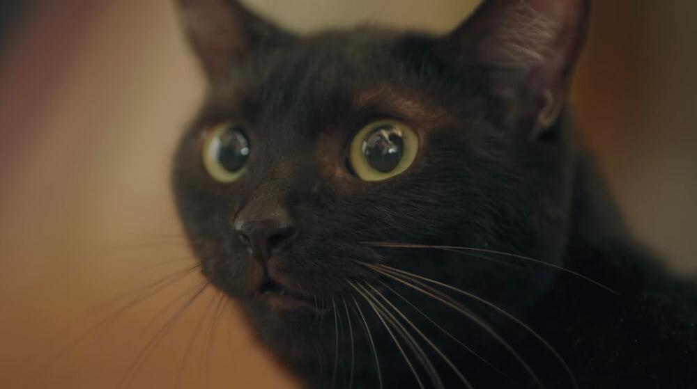 都城市の特別企画「ぬことぬっくん」に登場する黒猫