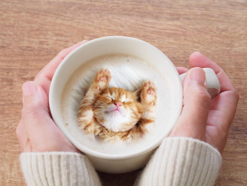 展示されているネコ写真をラテアートにしてくれる「ねこ写真ラテアート」