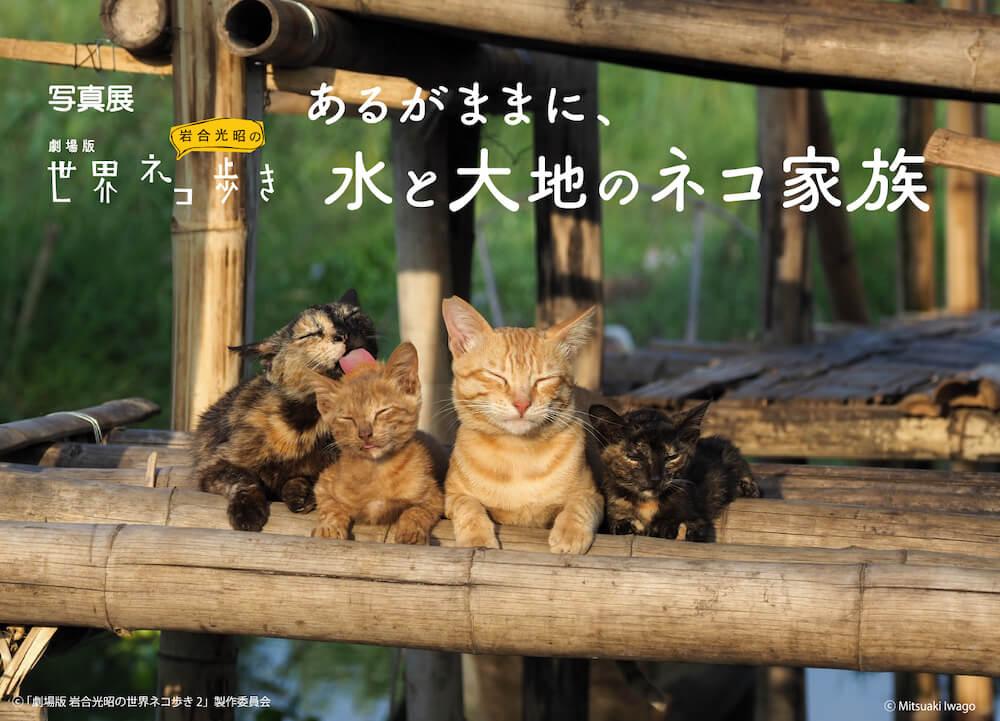 岩合光昭写真展「劇場版 岩合光昭の世界ネコ歩き あるがままに、水と大地のネコ家族」メインビジュアル