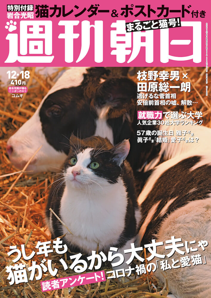 ネコ特集が掲載されている「週刊朝日の2020年12月18日号」の表紙イメージ