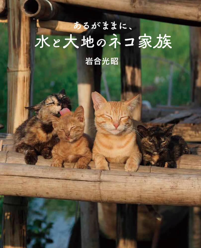 写真集『劇場版 岩合光昭の世界ネコ歩き あるがままに、水と大地のネコ家族』の表紙イメージ