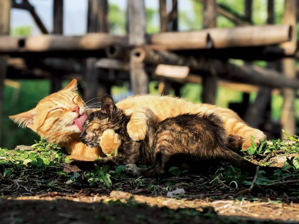 インレー湖の湖上で毛づくろいをする猫 by 岩合光昭写真展「世界ネコ歩き あるがままに、水と大地のネコ家族」