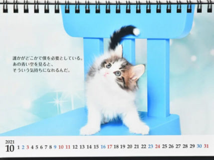 直木賞作家・志茂田景樹さんの猫カレンダーが今年も発売!辛い時も猫の写真と名言で癒やされるニャ