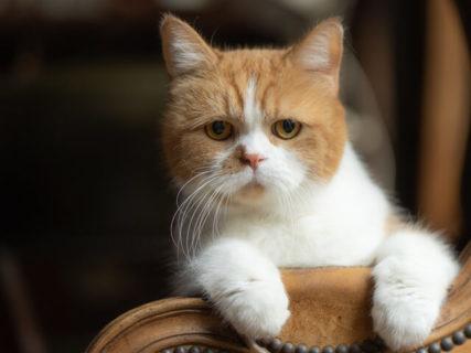 ふてニャン、桜井日奈子、サンシャイン池崎も登場!猫愛が詰まった雑誌「ネコブロス」が爆誕