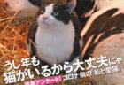 週刊朝日が4年連続で「ネコ特集号」を発売!藤あや子、六角精児らネコ好きインタビューも収録