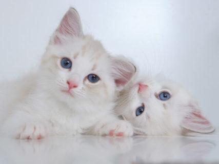 猫の行動学から正しい解決策を提示してくれる書籍「猫の困った行動 予防&解決ブック」