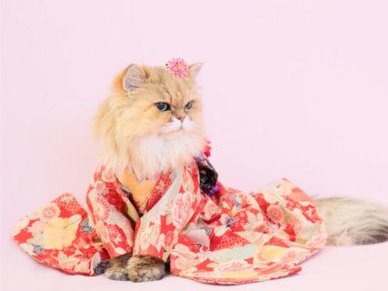 ネコの振り袖姿が可愛いすぎる!ヒト年齢で100歳になったご長寿猫の写真展「ねこめせん5」