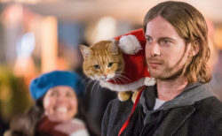 世界を魅了した茶トラ猫の続編映画は…Xmasに起こった物語!『ボブという名の猫2』公開決定