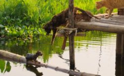 子猫が湖に落下!助けようとする母猫の仕草がグッとくる、映画「世界ネコ歩き」第2弾の予告映像を公開