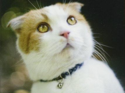 バカの壁の著者・養老孟司さんの愛猫「まる」が死去、人間なら88歳のご長寿ネコ