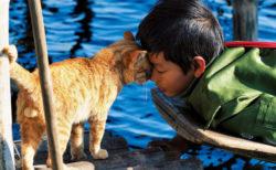 岩合さんの新作ネコ写真展「劇場版 岩合光昭の世界ネコ歩き あるがままに、水と大地のネコ家族」がスタート!北海道とミャンマーで暮らすネコ家族の写真110点を展示