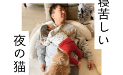 M-1の裏話も!猫5匹を飼っているお笑い芸人、かまいたち山内の初著作『寝苦しい夜の猫』