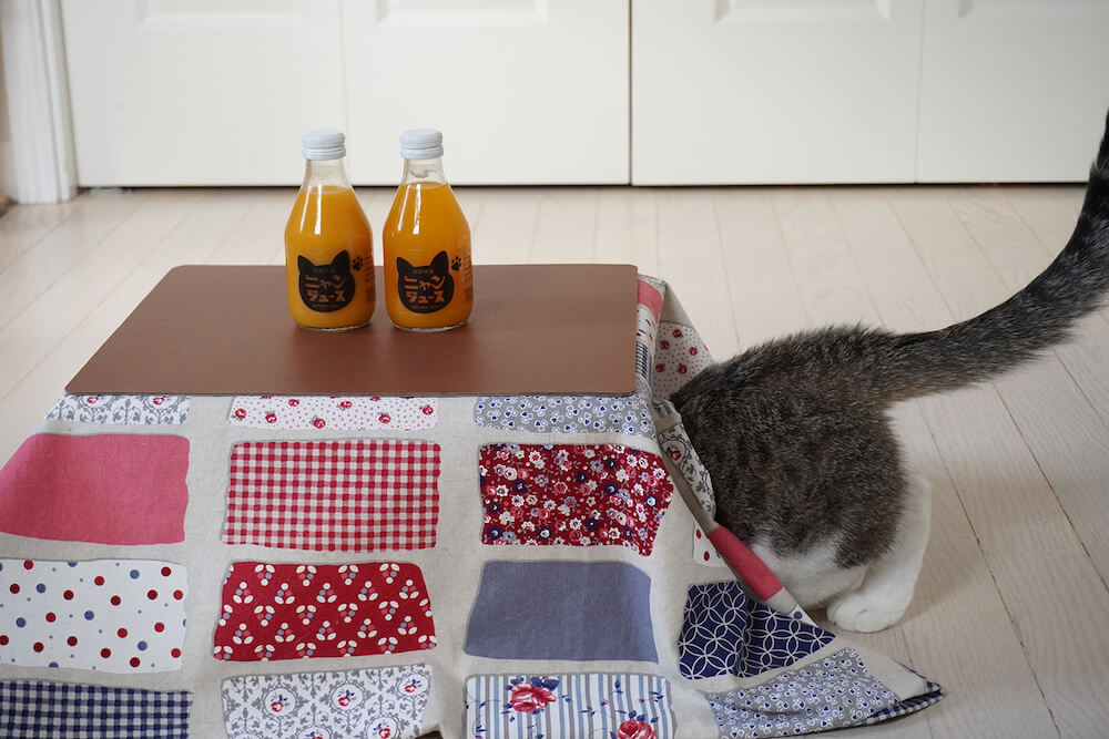 和歌山みかんジュース「ニャンジュース」に付いてくる猫用こたつの中に潜る猫