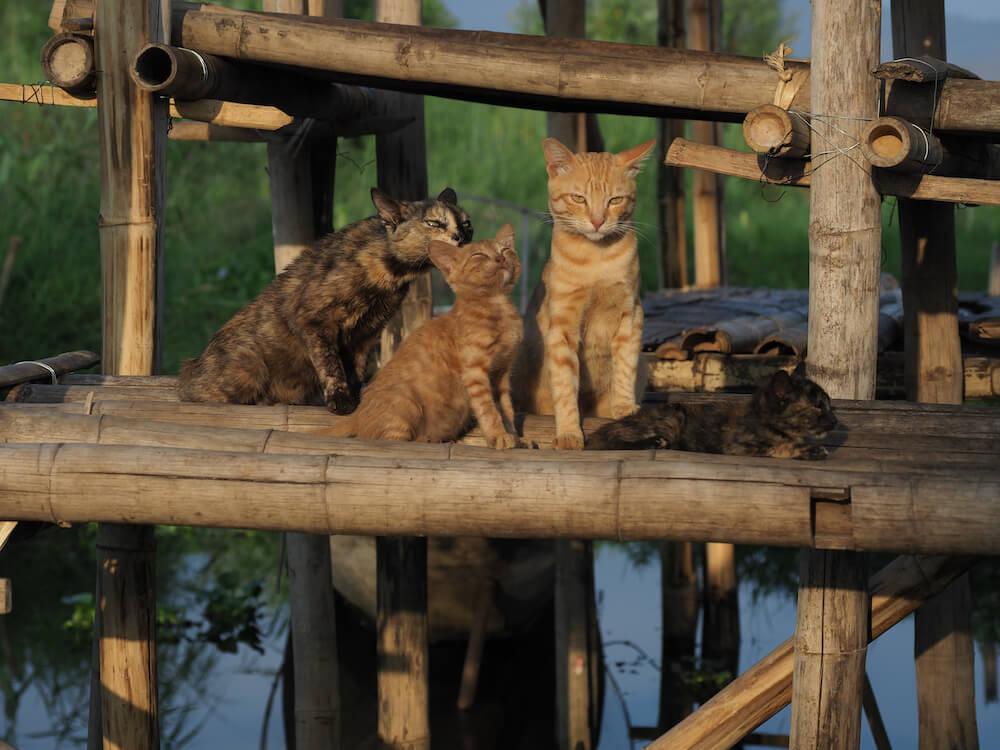 湖の上で暮らすネコの家族写真 by 映画『劇場版 岩合光昭の世界ネコ歩き あるがままに、水と大地のネコ家族』