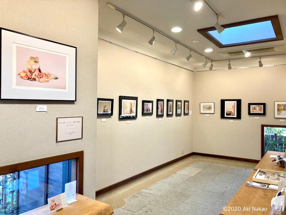 自家焙煎珈琲&ギャラリー 森の響(もりのおと)ギャラリースペース、猫の写真展開催風景