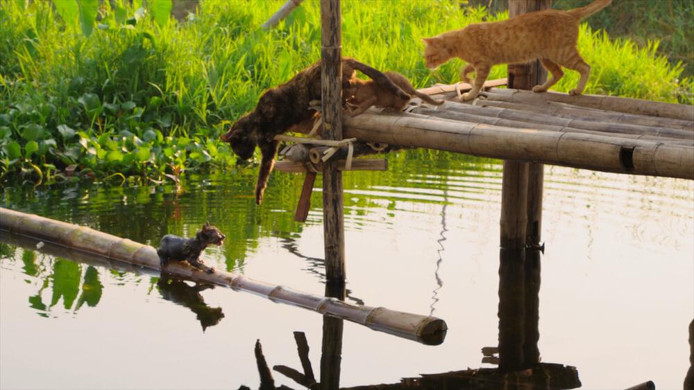 湖に落ちた子猫を助けようとする母猫の姿 by 映画『劇場版 岩合光昭の世界ネコ歩き あるがままに、水と大地のネコ家族』