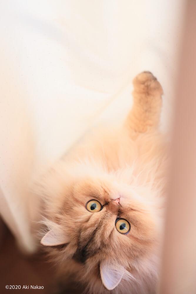 第58回豊田市民美術展入選作品「喜」 by ねこミュニケーターのnanonya.Aki 中尾亜希さんによる猫の写真