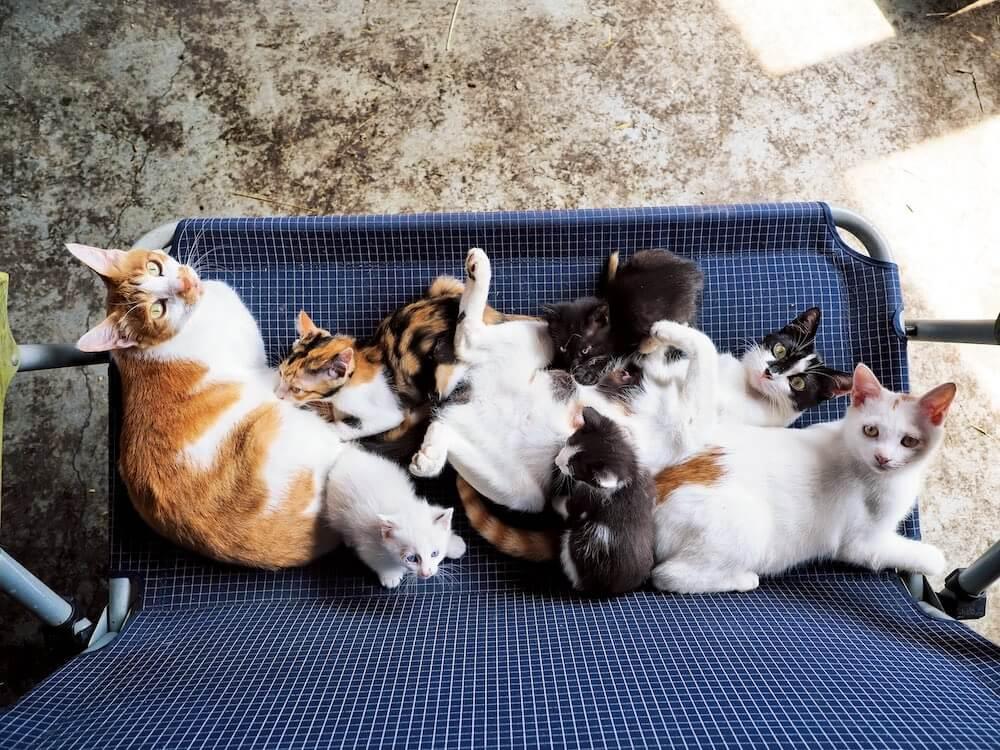 北海道の牧場で暮らすネコの大家族 by 岩合光昭写真展「世界ネコ歩き あるがままに、水と大地のネコ家族」