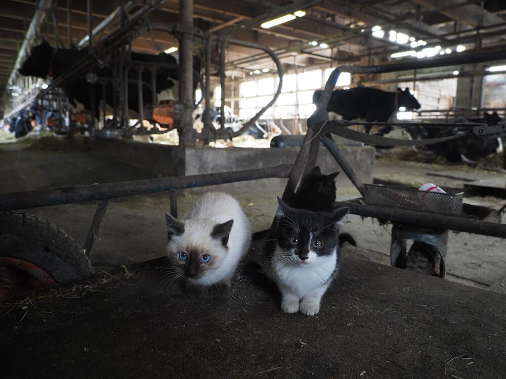 北海道の牧場で暮らす猫たち by 『劇場版 岩合光昭の世界ネコ歩き あるがままに、水と大地のネコ家族』