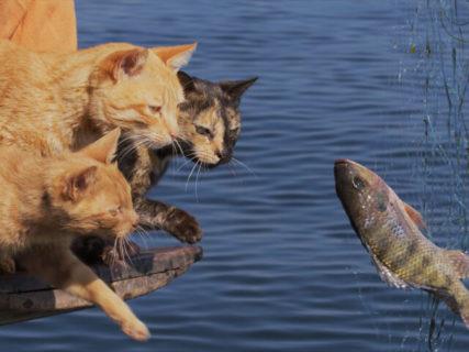魚を捕まえるのに必死なネコの映像も解禁!映画「岩合光昭の世界ネコ歩き」第2弾が上映スタート