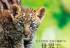 ネコ科好きにはたまらニャい!色鮮やかな写真で楽しめる書籍「世界で一番美しい野生ネコ図鑑」