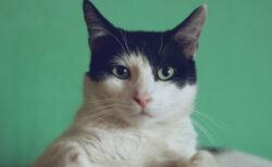 高齢猫・老猫の注意すべき病気とは?ねこ専門医・服部幸獣医師のWEBセミナーが1/30に開催