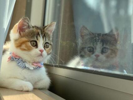 にゃん集中の猫が大丸東京店に集結!厳選した100匹のネコ写真展がオンラインでも同時開催中