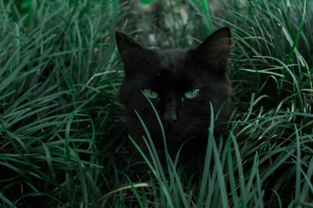ミステリアスな黒猫のイメージ写真