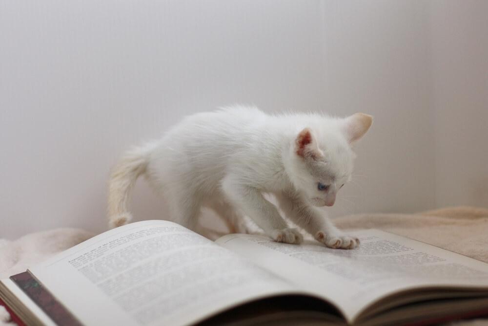 本を熱心に読む猫のイメージ写真